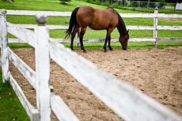 Solutions For The Hard To Catch Horse