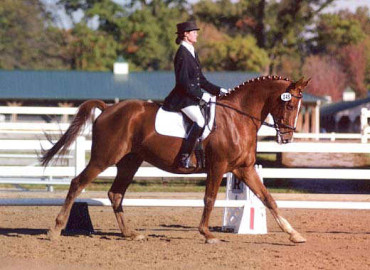 Counter Canter Lessons
