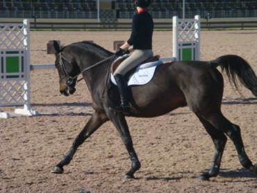 Stirrup-less Lessons Part Two Advanced Work