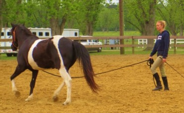 Lunging: Yield The Hindquarters