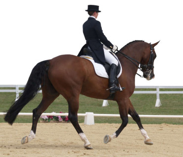 Teach Your Horse to Be Responsive to Your Leg