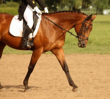 A Balanced Horse