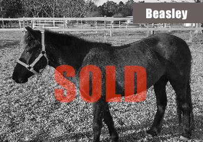 Beasley-sold