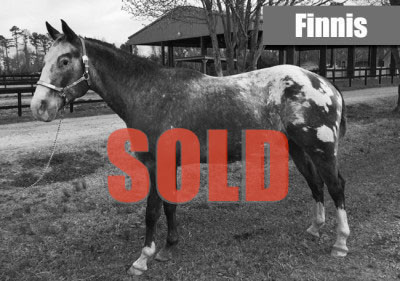 finnis-sold