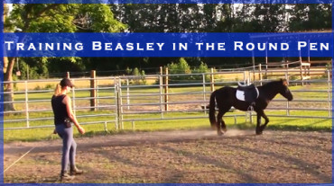 Training Beasley the Pony in the Round Pen