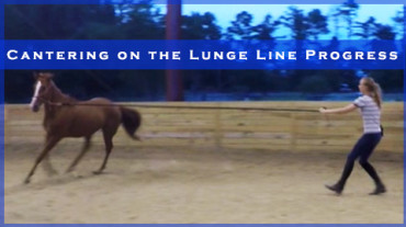 Cantering on the Lunge Line Progress