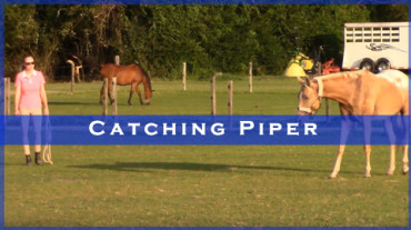 Catching Piper