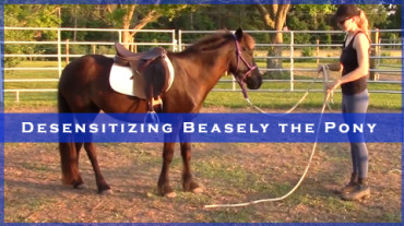 Desensitizing Beasley the Pony