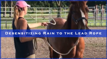 Desensitizing Rain to the Lead Rope