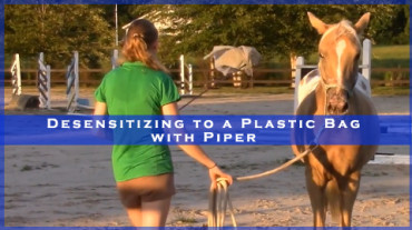 Desensitizing to a Plastic Bag with Piper