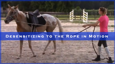 Desensitizing to the Rope in Motion with Piper