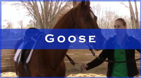 goose videos