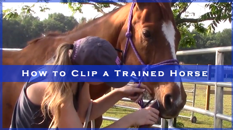 How to Clip a Trained Horse