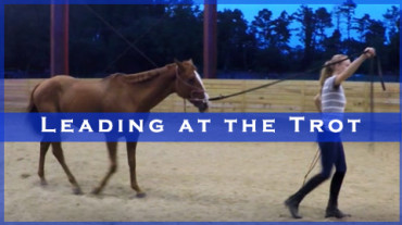 Leading at the Trot