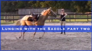Lunging with the Saddle Part Two