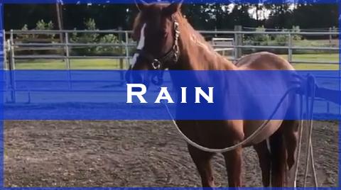 rain videos