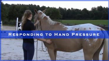Responding to Hand Pressure