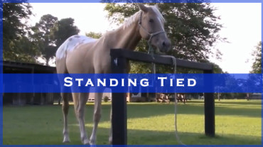 Standing Tied