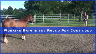 Working Rain in the Round Pen continued